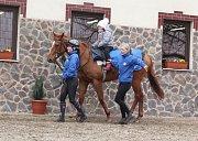 Den otevřených dveří v dostihové stáji Luka racing v Bošovicích.