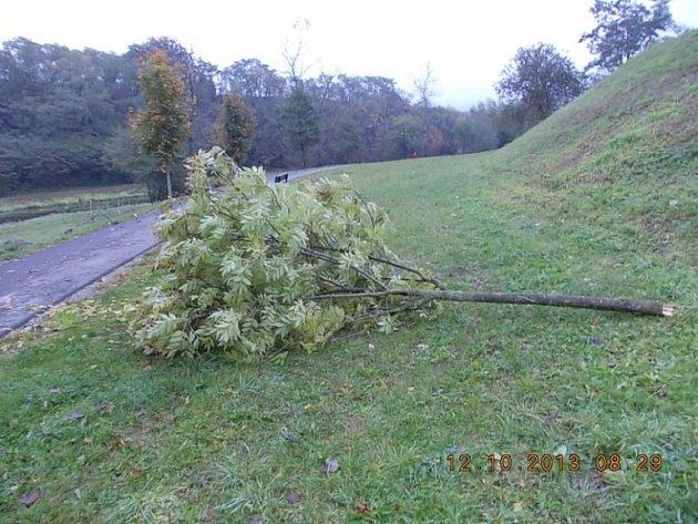 Strom, který poškodil vandal.