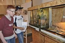 Živá zvířata na výstavě v Prácheňském muzeu v Písku si prohlédli také žáci Základní školy z Volyně.