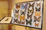 Vernisáž výstavy Příroda je mocná čarodějka aneb brouci a motýli nejen z Čech, Moravy a Slezska.