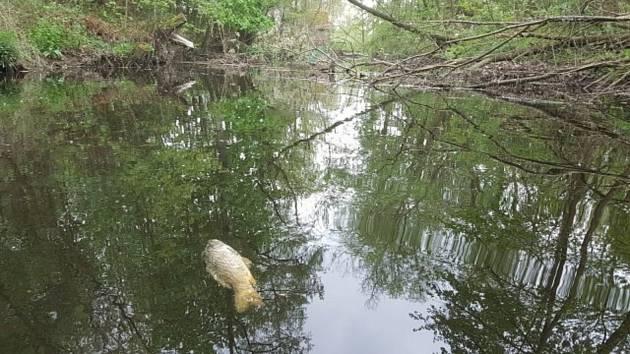 Okolí malé vodní elektrárny u Zátaví a především stav řeky Otavy zdokumentovali místní chataři.