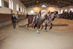 Z přehlídky koní v Zemském hřebčinci Písek.