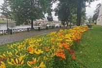 Písecké ulice a parky letos rozkvetly do krásy. Městské služby s odborem životního prostředí zrealizovaly výsadbu liliových luk i osazení různých druhů květináčů v centru.