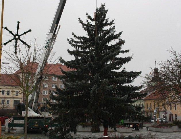 ČEKÁ NA ROZSVÍCENÍ. Letošní vánoční strom je z Milevska, loni byl z Přeborova.