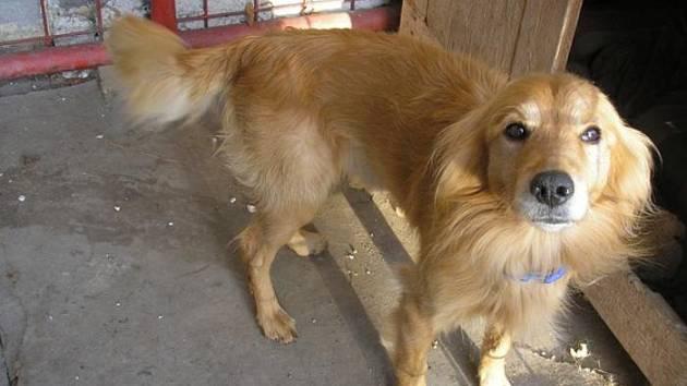 NALEZENEC. Pes v Bernarticích čeká na nového majitele.