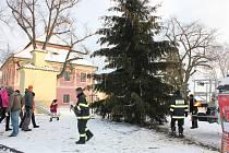 Chystání vánočního stromu a výzdoby v Záhoří.