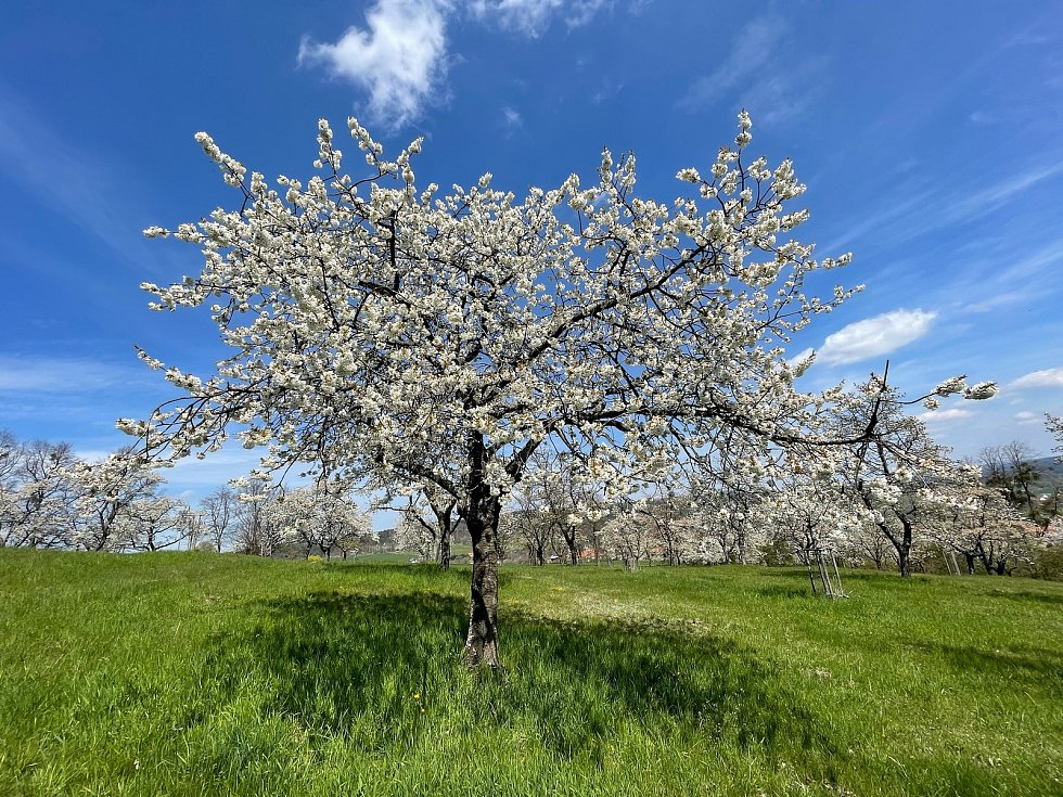 První máj je lásky čas a řada zamilovaných tak bude v sobotu hledat romantické místo k polibku pod rozkvetlým stromem. Jedním takovým by mohla být vyhlídka na Čížovské hoře nebo také na Jakubu, kde je krásný výhled na Čížovou a její okolí.