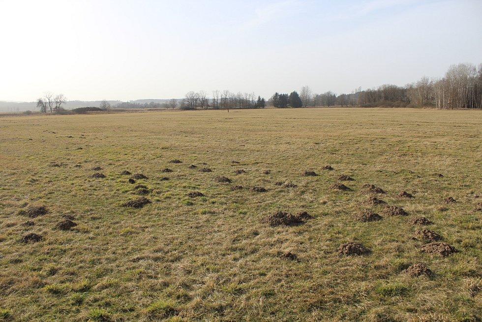 Klokočínské louky nedaleko Protivína na Písecku.