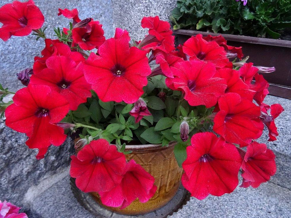 Květnové květy.