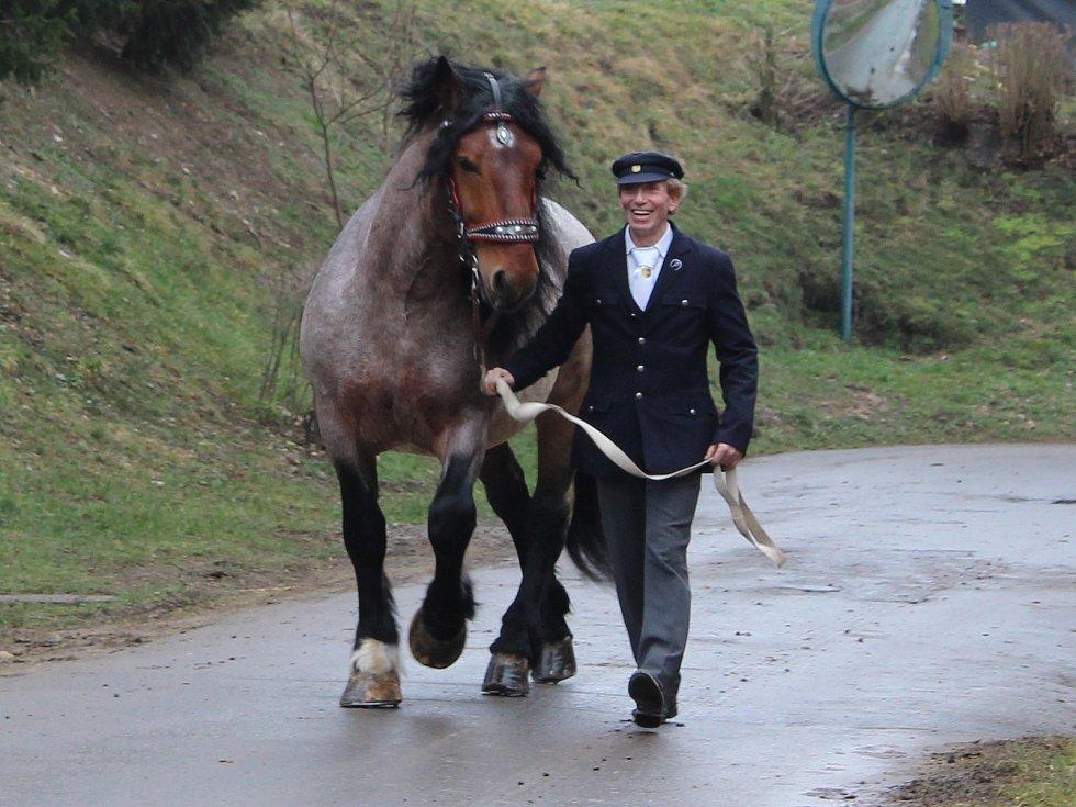Jarní přehlídka plemenných koní v Zemském hřebčinci Písek.