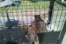 Milevsko chystá odchyt a kastraci toulavých koček. Ilustrační foto.