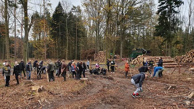 Žáci písecké Husovky se zapojili do obnovy lesů.