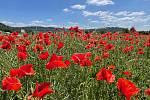 Červená pole jsou pastvou pro oko.