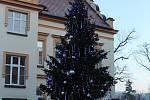 5. Vánoční strom v areálu Nemocnice Písek.