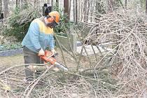 Snímek je z Lesního hřbitova v Písku, kde zaměstnanci  městských služeb před pěti lety likvidovali popadané stromy.