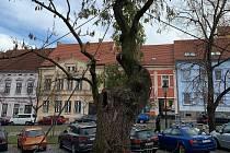 Jasan v Komenského ulici v Písku.