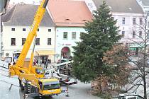 Vánoční strom na píseckém Velkém náměstí.