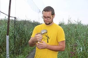 Akce Acrocephalus - odchyt a kroužkování ptáků na Řežabinci u Ražic.