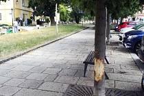 Poničené stromy.