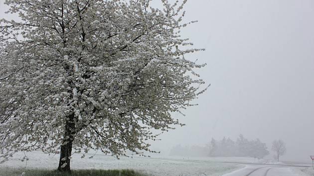 Zasněžené aprílové ráno na Kovářovsku.
