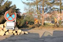 Kácení stromů na píseckém Výstavišti.