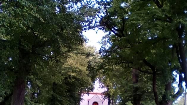 Alej v obci Květov.