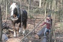 Koně se dostanou i do míst, kam stroje nemůžou.