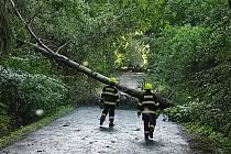 Silný vítr pokácel stromy u Čížové.