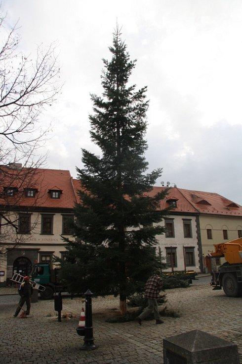 Zhruba šestnáct metrů vysoká jedle bude letos v Prachaticích symbolem Vánoc na Velkém náměstí.