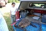 Zvážit, změřit, očipovat, označit a pak jsou bobři vypuštěni zpět do přírody.