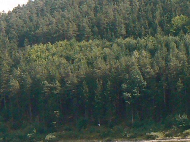 O majiteli lesa se obce mezi sebou nedohodly, rozhodne až soud. Ilustrační foto.