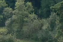 Lesopark se veřejnosti otevře již za pár dní, výstavba je téměř hotova. Ilustrační foto.