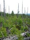 Národní park Šumava, srovnání snímků, rok 2014.