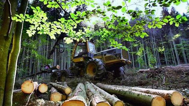 ŠUMAVA. Ve II. zóně národního parku Šumava u Schwarzenberského kanálu poblíž Jeleních vrchů pokračovaly v pondělí harvestory v těžbě stromů napadených kůrovcem.