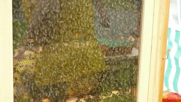 Slavnosti medu ve Včelné pod Boubínem.