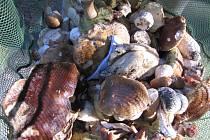 Na houbách s Karlem Boháčem z Chvalovic.