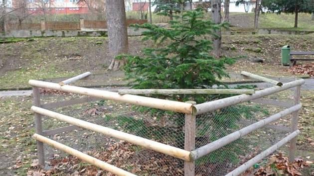 Dřevěné  ohrádky chrání stromky proti vandalům