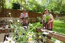 Svaz zdravotně postižených se stará o mezigenerační zahradu v Prachaticích. Nové rostlinky jsou v zemi.