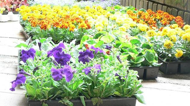 Zloděje květinové výzdoby čekají sankce.