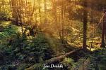 Kniha Pralesy Šumavy