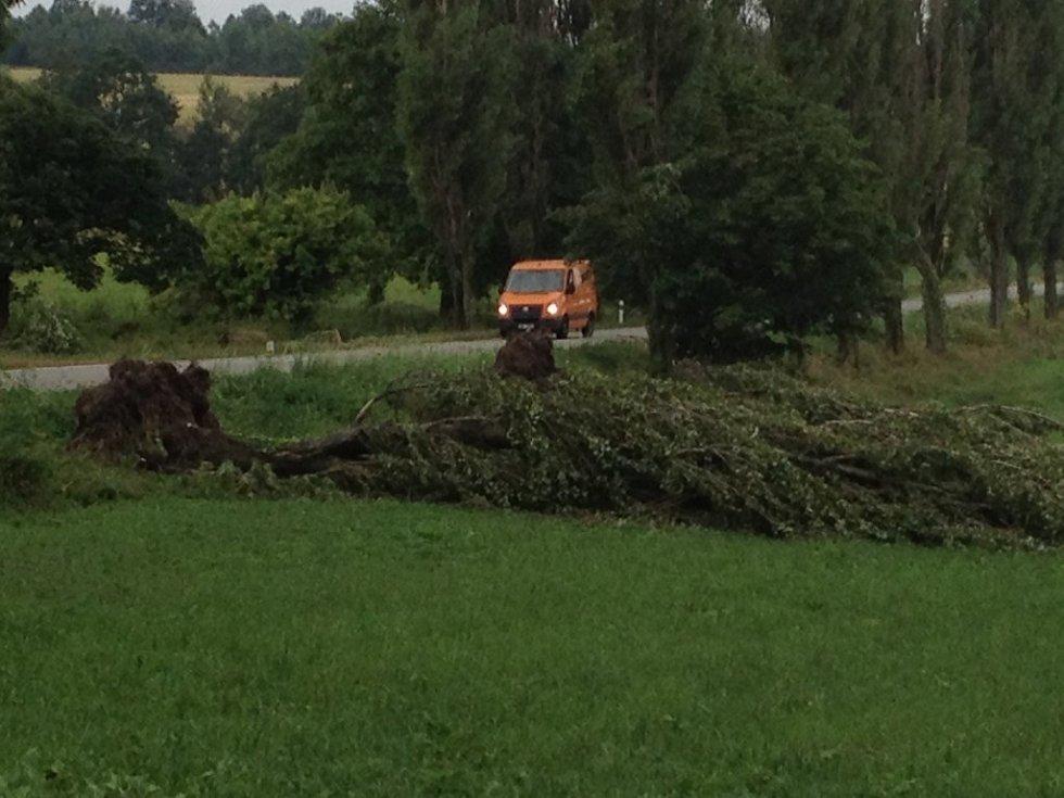 Vyvrácený strom u Obory.