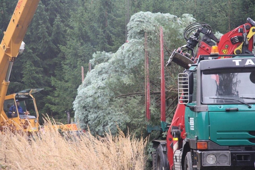 Ještě doladit poslední usazení na návěs a strom může vyrazit do centra Prachatic.