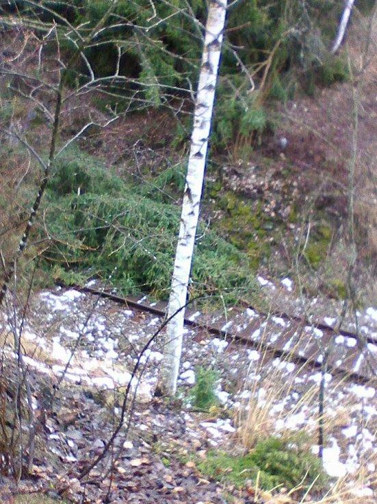 Strom na kolejích v Lenoře pod skládkou.
