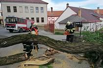 Hasiči ve Vlachově Březí odstraňovali strom, který spadl na silnici.