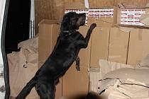 Služební pes odhalil cigaretový kontraband schovaný mezi trpaslíky.