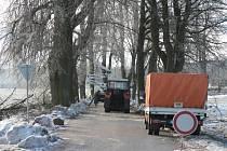 Námraza poškodila i chráněnou alej podél silnice k obci Buk.