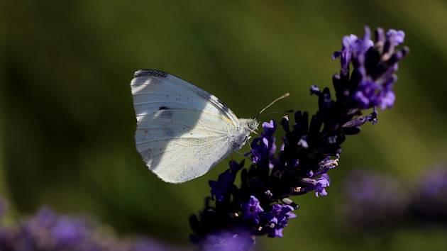 Motýli si užívají sluníčka.