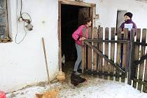 Vinou ptačí chřipky, která se prokázala ve velkochovu kachen ve Vlachově Březí, bylo nutno provést sčítání drůbeže i u drobných chovatelů v rozsáhlém okolí.