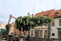 Prachatické náměstí zdobí nový vánoční strom. Jedli obrovskou ještě zbývá nazdobit.