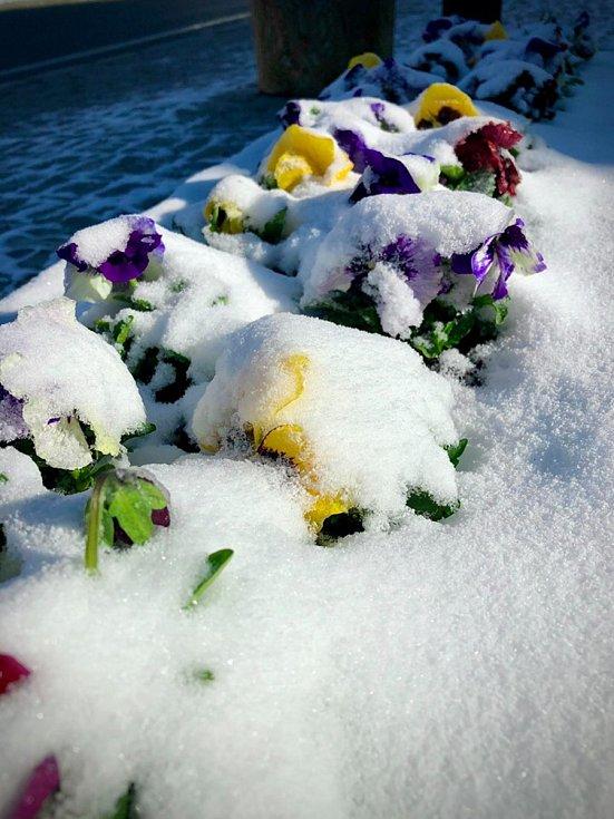 Zasněžená květnová Kvilda.